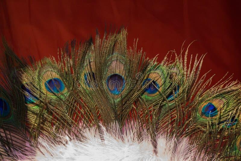 Schöne Vogelfedern für dekorative Ziele stockbild