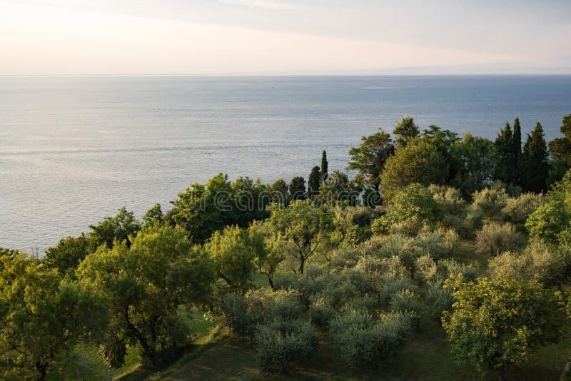Schöne Vogelperspektive auf Waldkiefern auf adriatischer Küstenlinie, Slowenien lizenzfreies stockbild