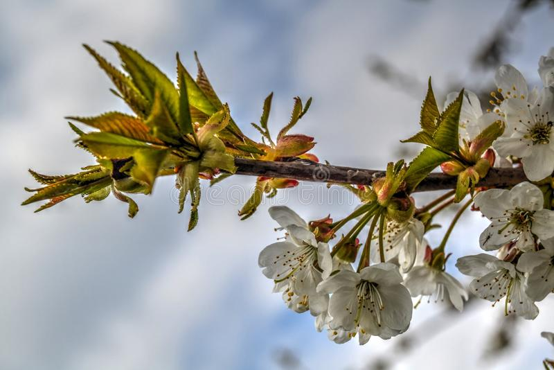 Schöne Vorfrühlingsblumen stockbild