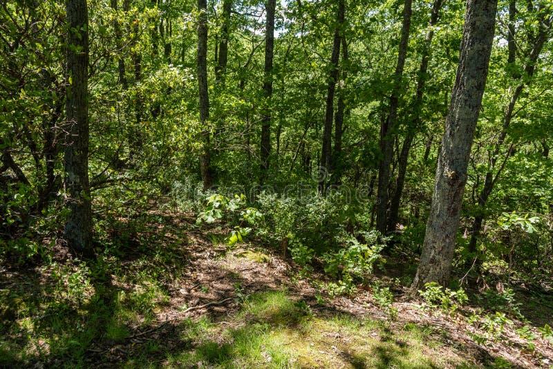 Schöne Waldaussicht nahe blauen Ridge Parkway im Frühjahr lizenzfreies stockbild
