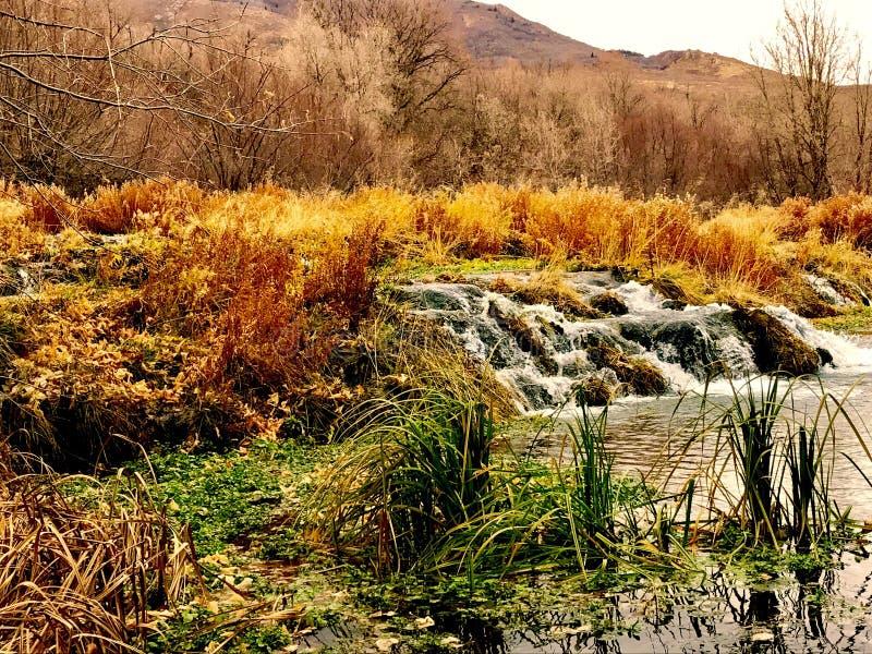 Schöne Wasserfälle stockbilder