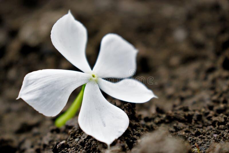 Schöne weiße Blume mitten in einem Buch lizenzfreie stockfotografie