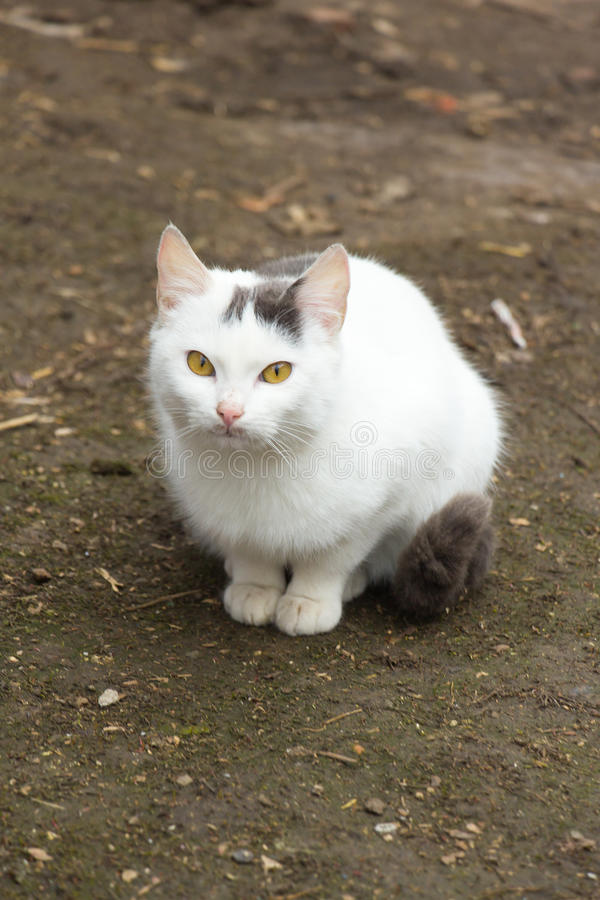 Schöne weiße Katze lizenzfreies stockbild