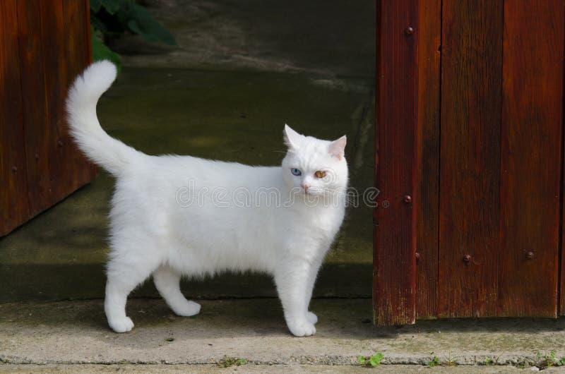 Schöne weiße Katze mit verschiedenen Farbaugen stockbilder