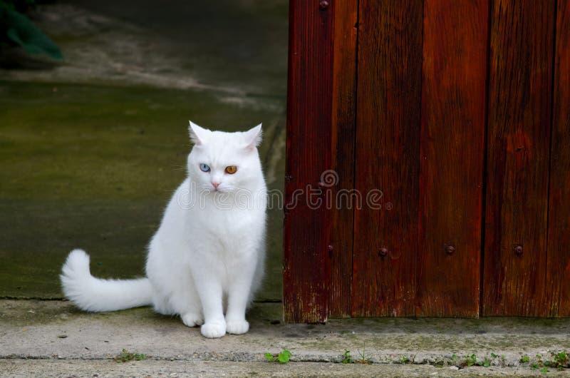 Schöne weiße Katze mit verschiedenen Farbaugen stockfoto