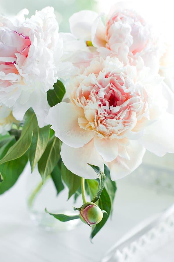 Schöne weiße Pfingstroseblumen lizenzfreie stockfotos