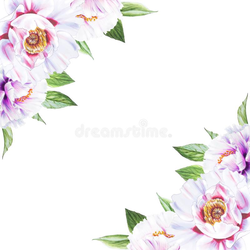 Schöne weiße Pfingstroseneckzarge Blumenstrau? von Blumen Blumendruck Markierungszeichnung vektor abbildung
