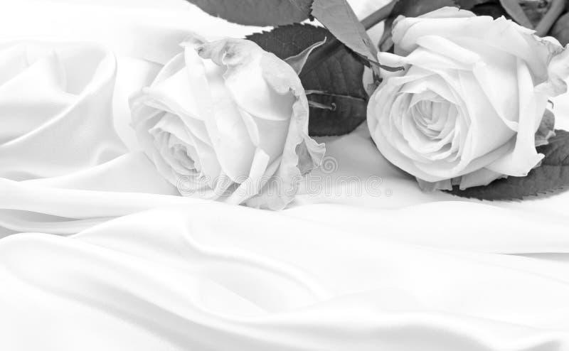 sch ne wei e rosen in schwarzweiss stockfoto bild von makro rosa 78543790. Black Bedroom Furniture Sets. Home Design Ideas