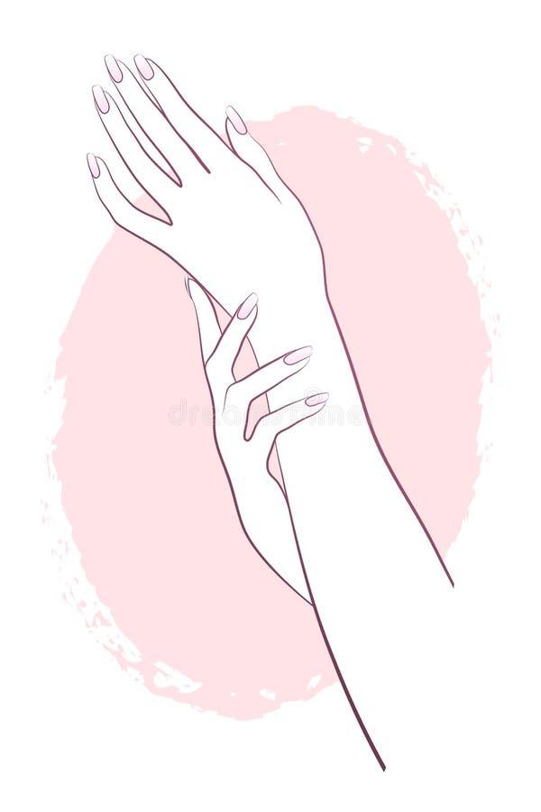 Schöne weibliche Hände des Vektors lizenzfreie abbildung