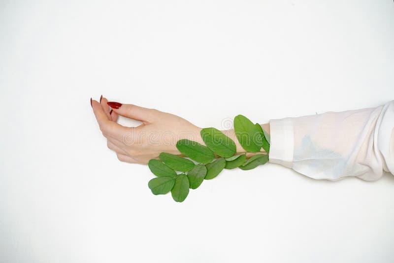 Schöne weibliche Hand, die auf weißem Hintergrund mit dem Zweig mit grünen Blättern, Handpflegekonzept liegt stockfotos