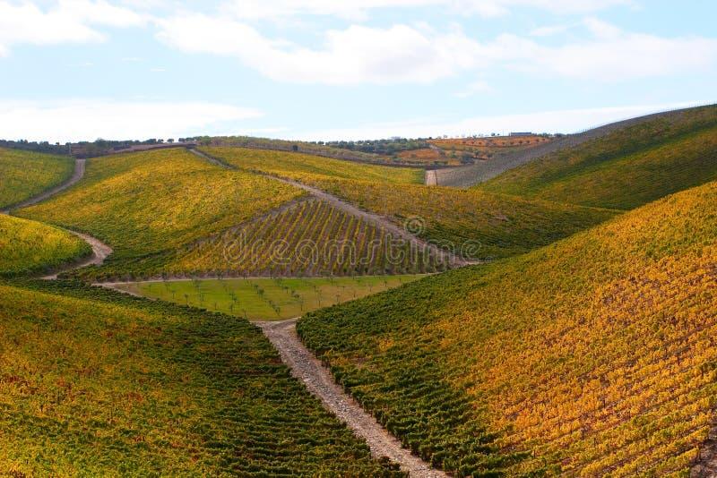 Schöne Weinberg-Landschaft lizenzfreie stockfotos