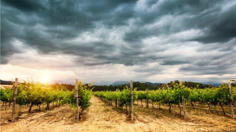 Schöne Weinberg-Landschaft lizenzfreie stockbilder