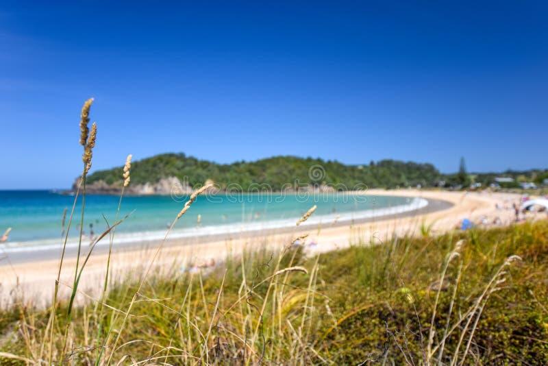 Schöne Weitwinkelansicht von Matapouri-Strand nahe Whangarei auf der Nordinsel von Neuseeland Gras im Vordergrund lizenzfreies stockbild