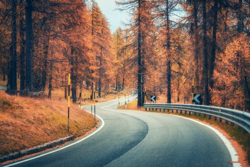 Schöne wickelnde Gebirgsstraße im Herbstwald bei Sonnenuntergang stockfotos