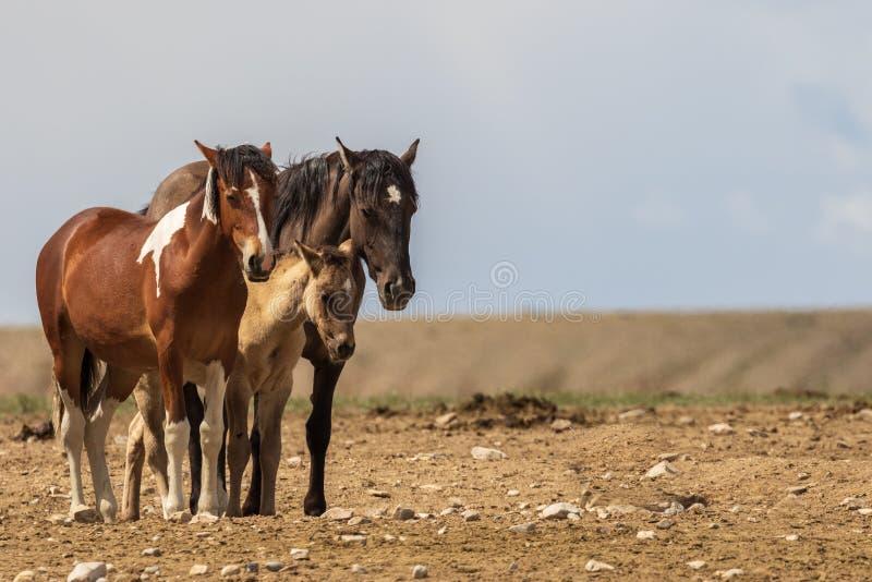 Schöne wilde Pferde im Sommer stockfotos