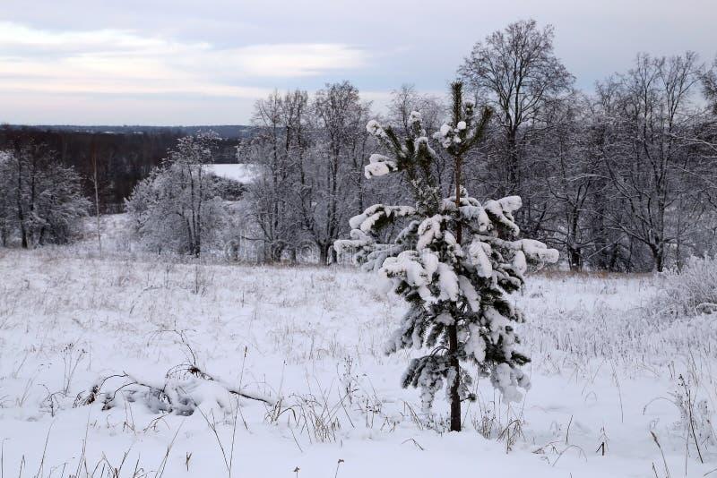 Schöne Winterlandschaft bei Sonnenuntergang stockbilder