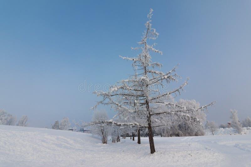 Schöne Winterlandschaft: Eisige Bäume im Januar, Österreich postkarte lizenzfreies stockbild