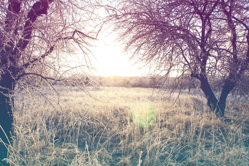 Schöne Winterlandschaft mit dem Weinlesetonen lizenzfreie stockfotos