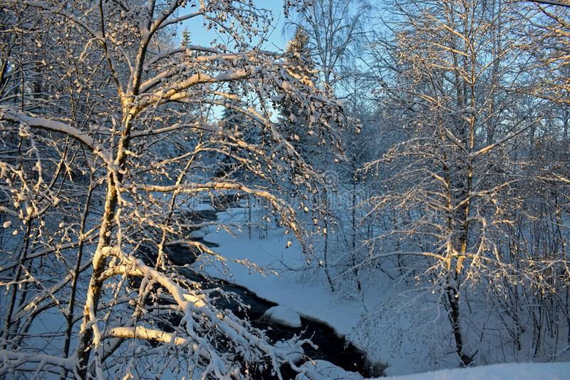 Schöne Winterlandschaft nahe dem Fluss, viel Schnee, die Sonne stockbild