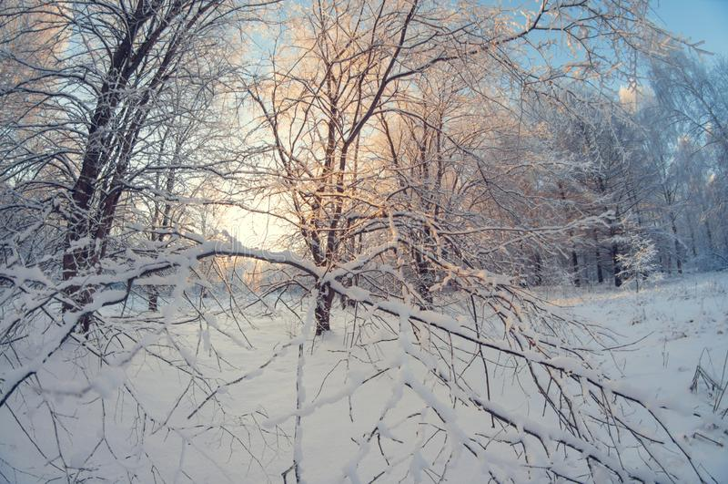 Schöne Winterlandschaft, schneebedeckter Wald an einem sonnigen Tag, Türspionsverzerrung, hohe schneebedeckte Bäume mit einem bla stockbild