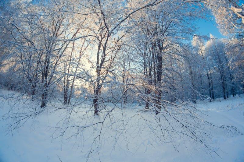 Schöne Winterlandschaft, schneebedeckter Wald an einem sonnigen Tag, Türspionsverzerrung, hohe schneebedeckte Bäume mit einem bla lizenzfreies stockfoto