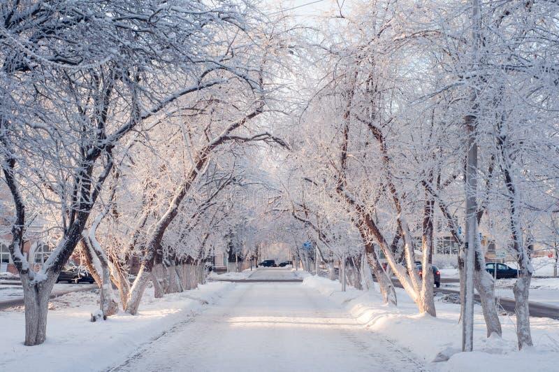 Schöne Winterstadtgasse an einem sonnigen Tag, Bäume im Schnee stockfotografie