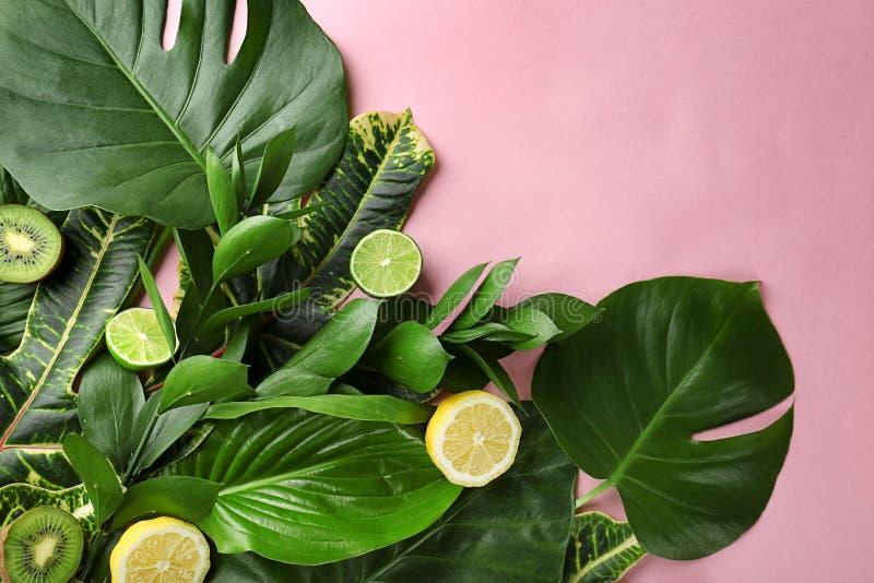 Schöne Zusammensetzung mit Vielzahl von exotischen frischen Anlagen und von Früchten auf rosa Hintergrund lizenzfreie stockfotografie