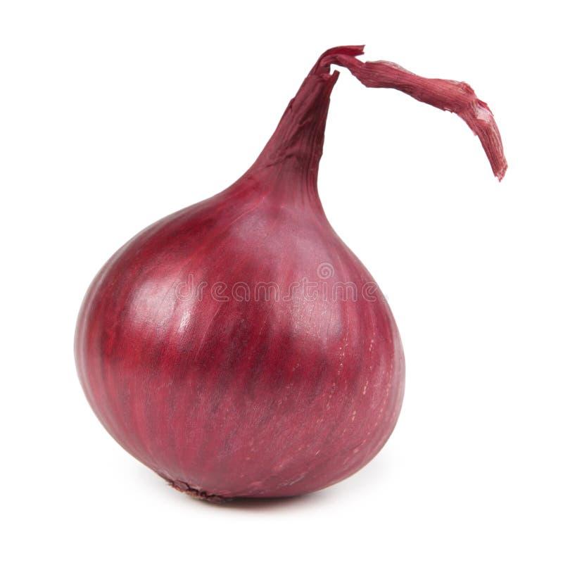 Schöne Zwiebel lokalisiert auf weißem Hintergrund stockfotos