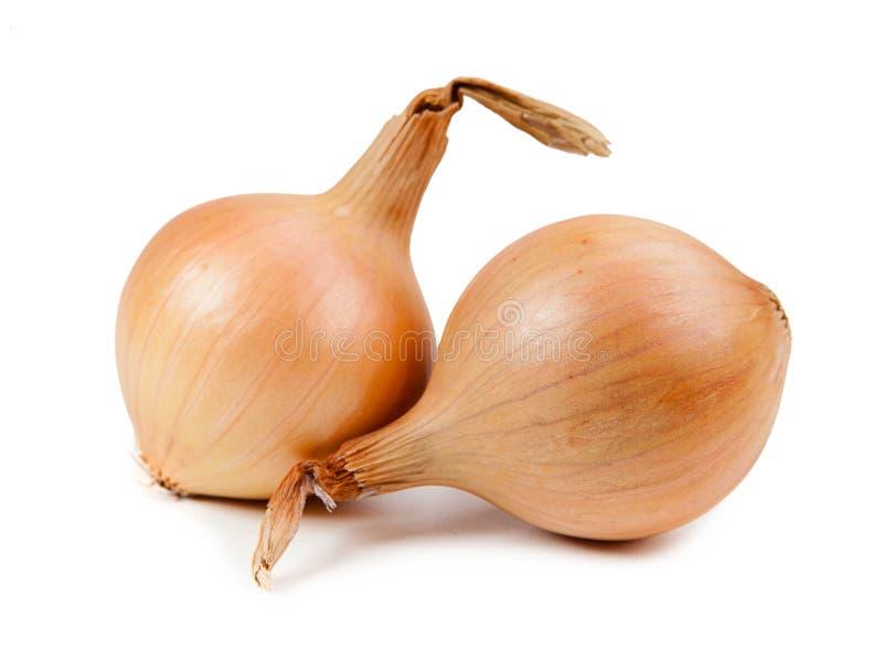 Schöne Zwiebel lokalisiert auf weißem Hintergrund stockfoto