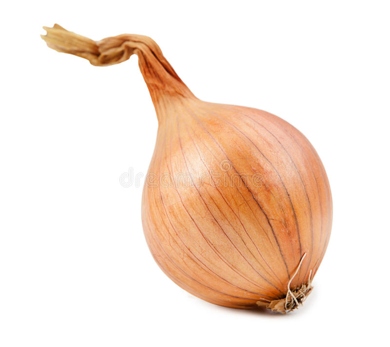 Schöne Zwiebel lokalisiert auf weißem Hintergrund lizenzfreie stockfotos