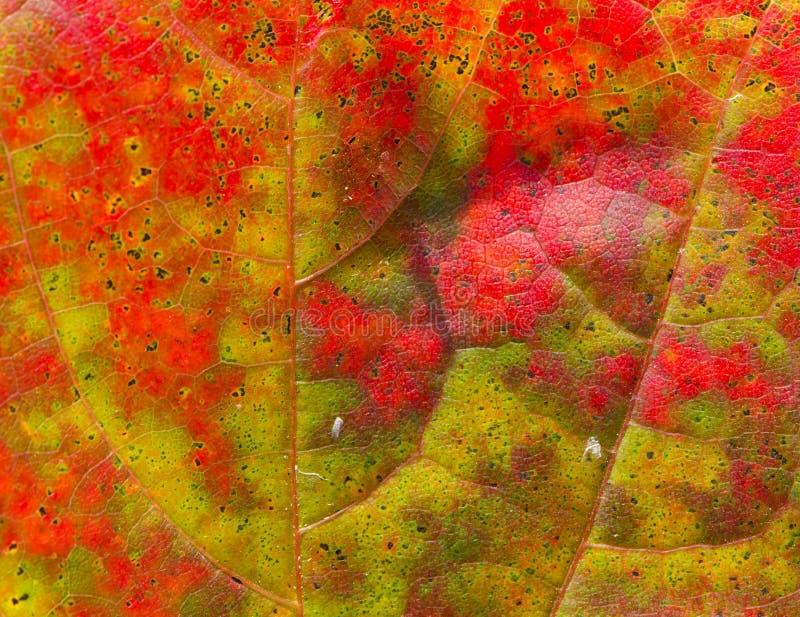 Schöner abstrakter Herbst-Ahornblatthintergrund lizenzfreie stockfotos