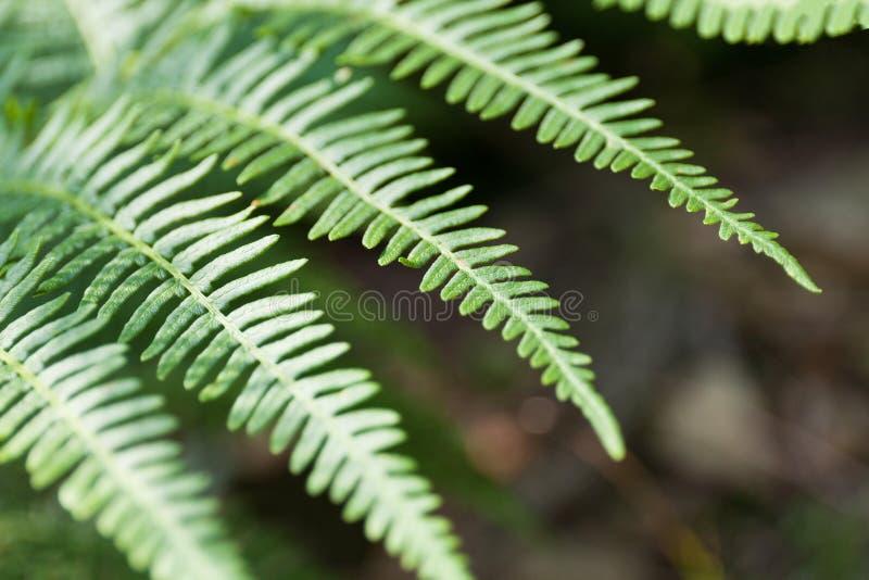 Schöner abstrakter Hintergrund, Botanikniederlassung Waldanlage, tropischer Dschungel lizenzfreies stockfoto