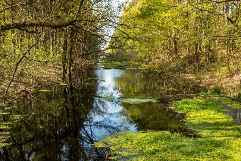 Schöner Abzugsgraben im Naturreservat Fochteloerveen lizenzfreies stockfoto