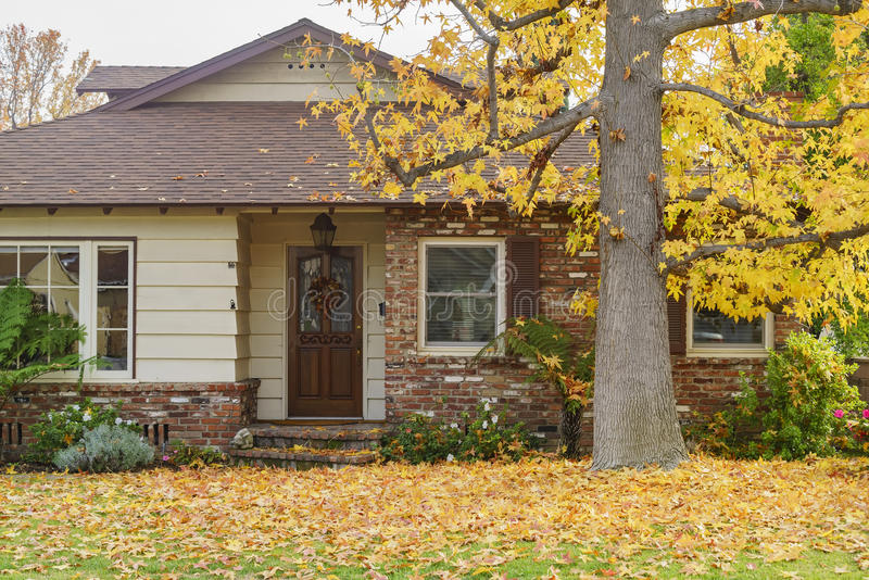 Schöner Ahornbaum mit Fallfarbe vor einem Haus stockbilder