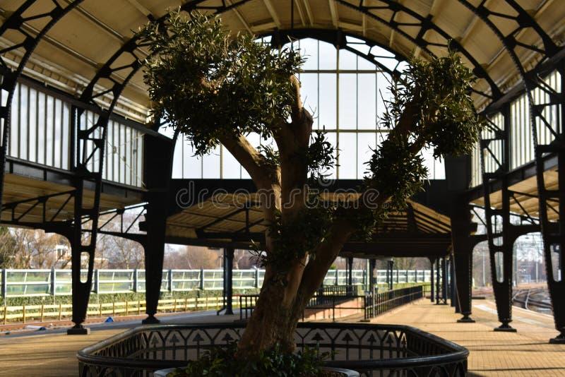 Schöner alter alter Baum am Haarlem-Hauptbahnhofs-Sonnenlicht-Bogen-Gebäude lizenzfreie stockfotografie