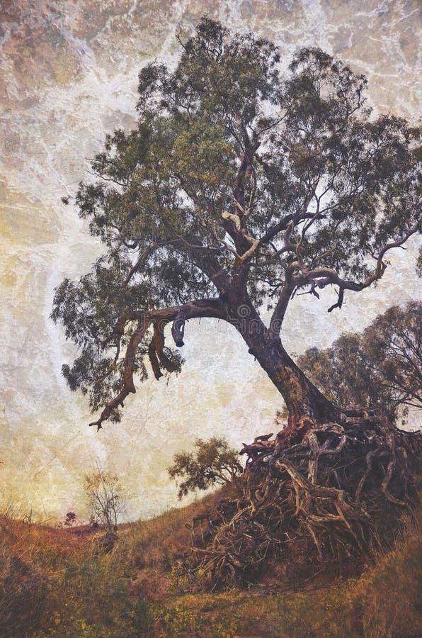 Schöner alter Baum mit herausgestellten verwirrten Wurzeln stockfotos
