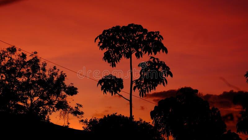 Schöner Baum, der im Sonnenuntergang - Schattenbild steht lizenzfreie stockbilder