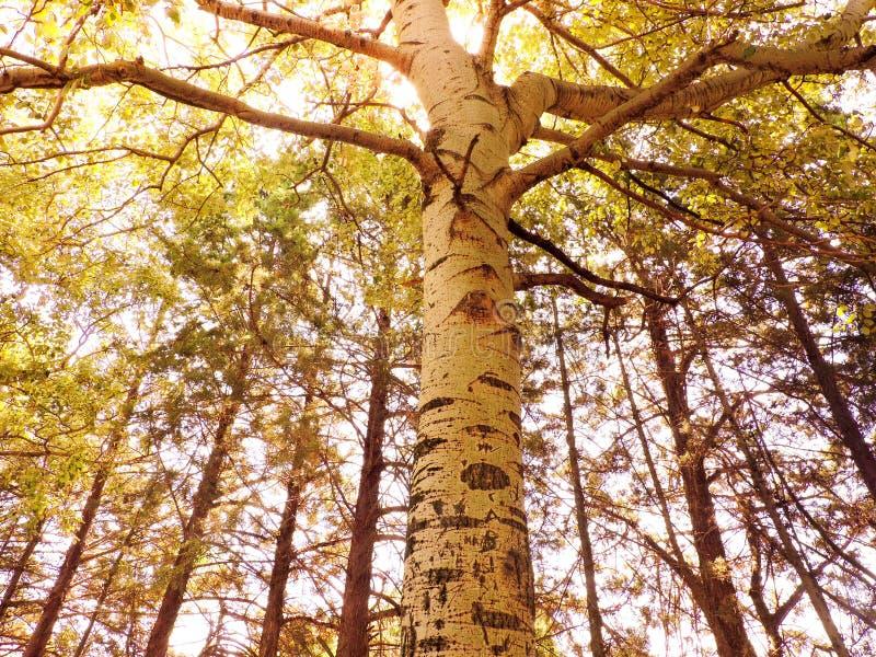 Schöner Baum in einem Park in einer ruhigen Stadt lizenzfreies stockfoto