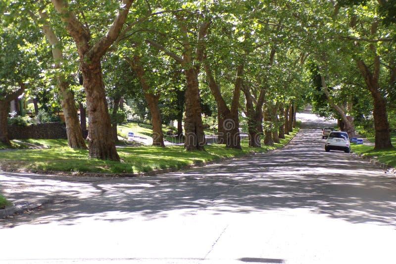 Schöner Baum gezeichnete Vorstadtnachbarschaft, Grün und Stoff! stockbild