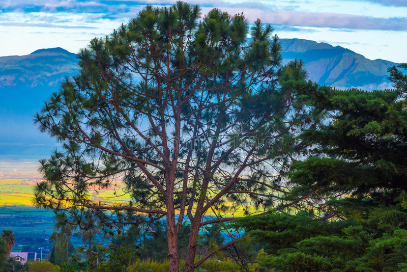 Schöner Baum im früher Morgen-Licht stockfotos