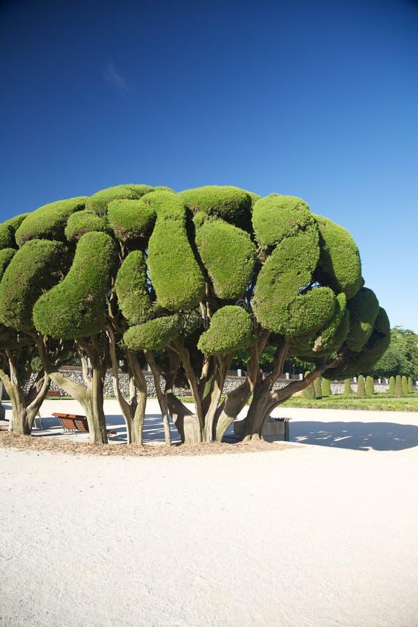 Schöner Baum im Madrid-Park stockbilder