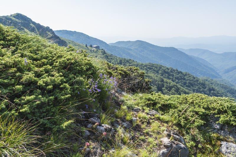 Schöner Bergblick von den Eingängen auf dem Weg zur Eho-Hütte Das Troyan Balkan ist außergewöhnlich malerisch und bietet a an stockbild