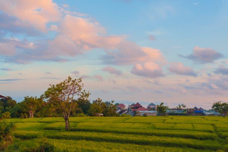 Schöner bewölkter Sonnenuntergang mit Reisterrasse in Bali, Indonesien lizenzfreie stockfotografie