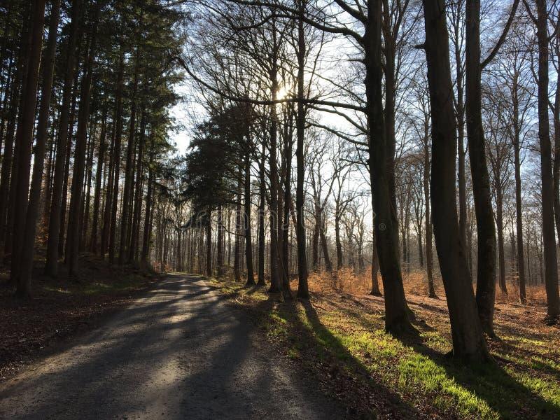 Schöner blauer Wald, Sonnenlicht und Bäume in Frankreich stockbild