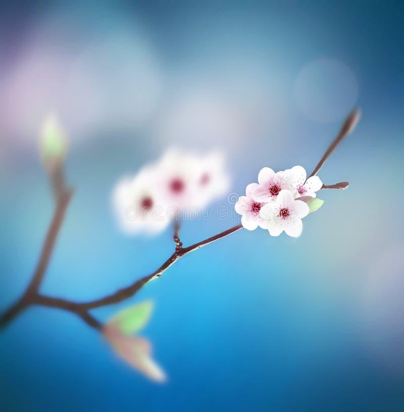 Schöner Blumenfrühlingszusammenfassungshintergrund der Natur Niederlassung des Blühens auf Hintergrund des blauen Himmels lizenzfreie stockfotografie