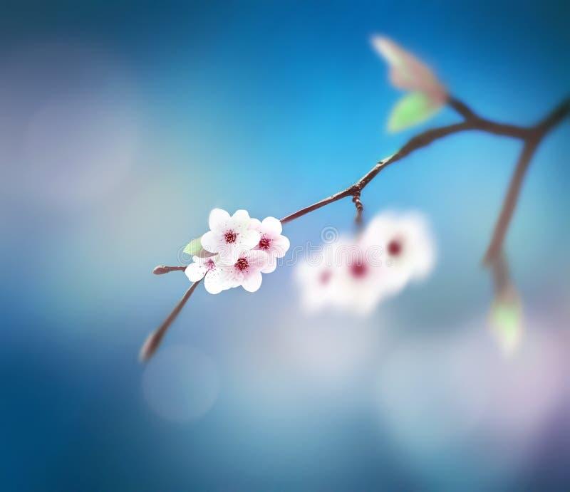 Schöner Blumenfrühlingszusammenfassungshintergrund der Natur Niederlassung des Blühens auf Hintergrund des blauen Himmels stockfoto