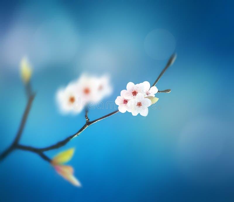 Schöner Blumenfrühlingszusammenfassungshintergrund der Natur Niederlassung des Blühens auf Hintergrund des blauen Himmels stockfotografie