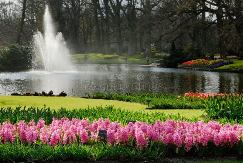 Schöner Blumengarten stockbild