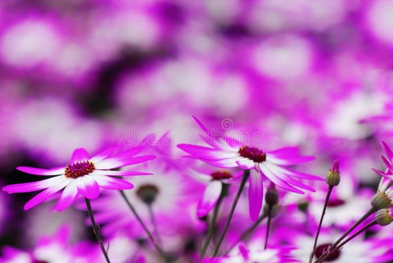 Schöner Blumengarten stockfotos