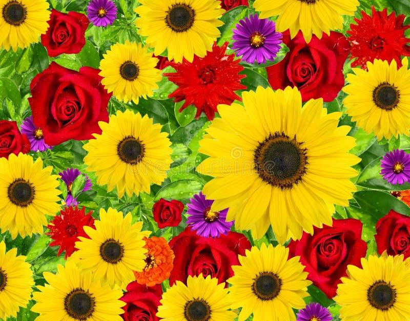 Schöner Blumenhintergrund stockfotos